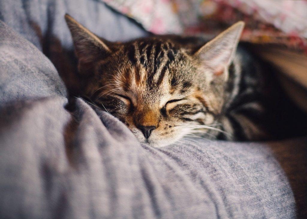 睡眠プログラムとは